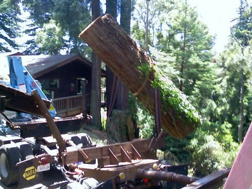 redwood lumber tree removal