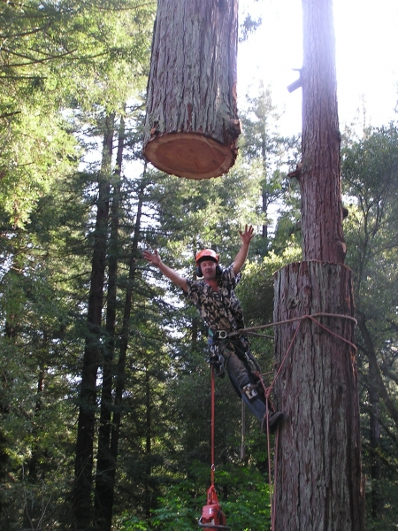 redwood large tree removal