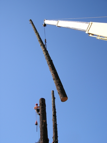crainwork tree removal