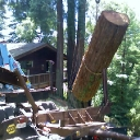 tree removal old growth redwood lumber