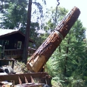 redwood logs