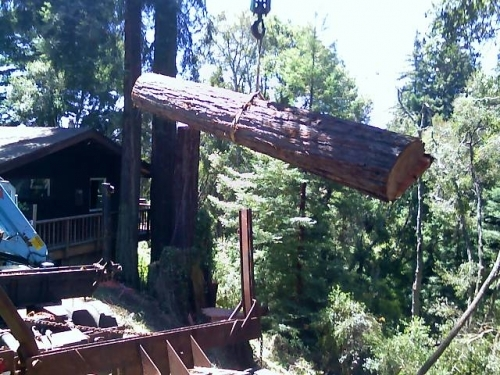 Tree Removal redwood lumber