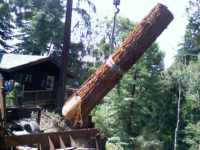 Santa Cruz Tree Service Redwood logs loading