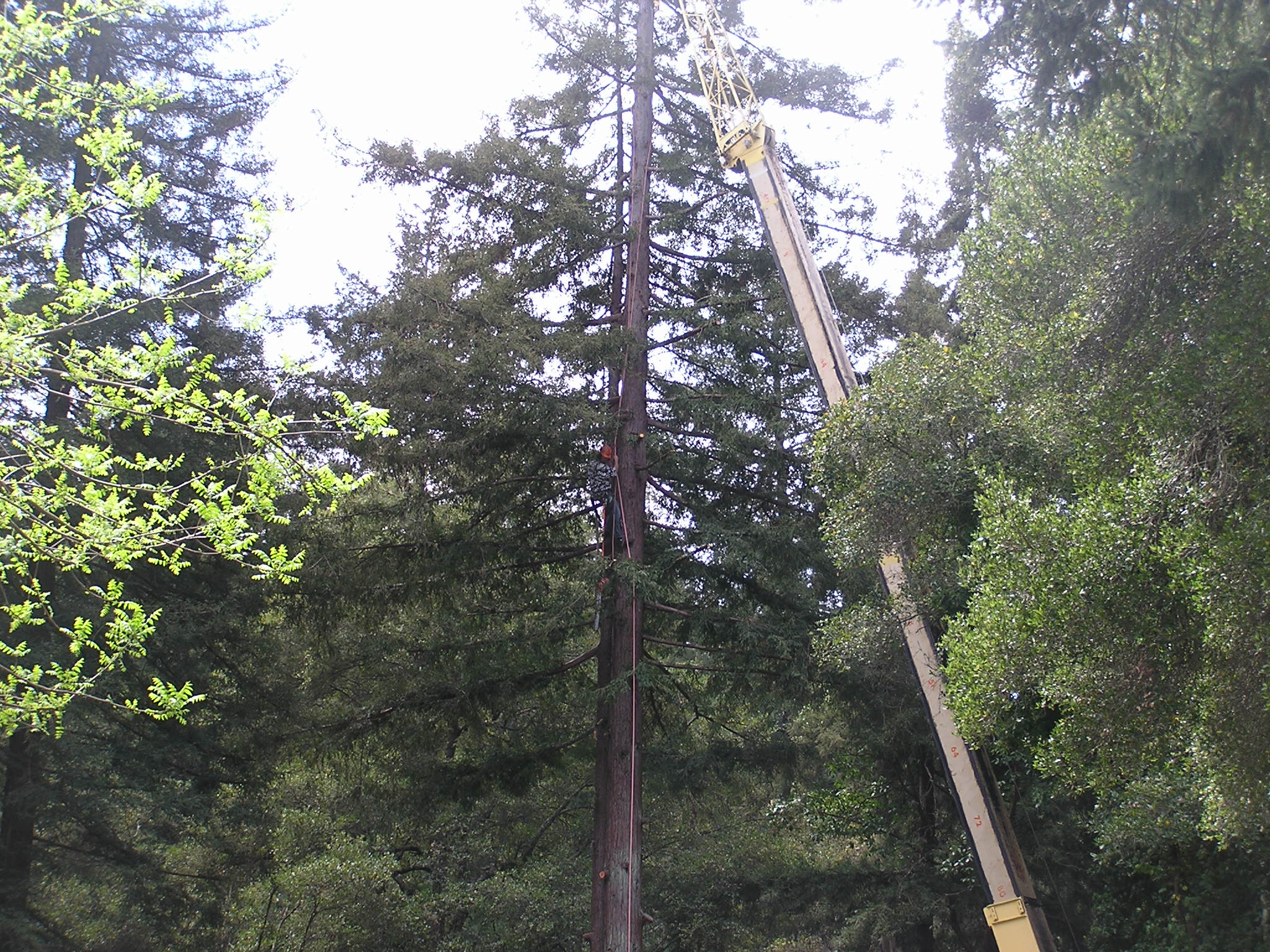 Tree Removal highlift