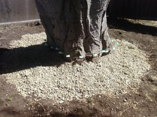 Tree nutrients injectors