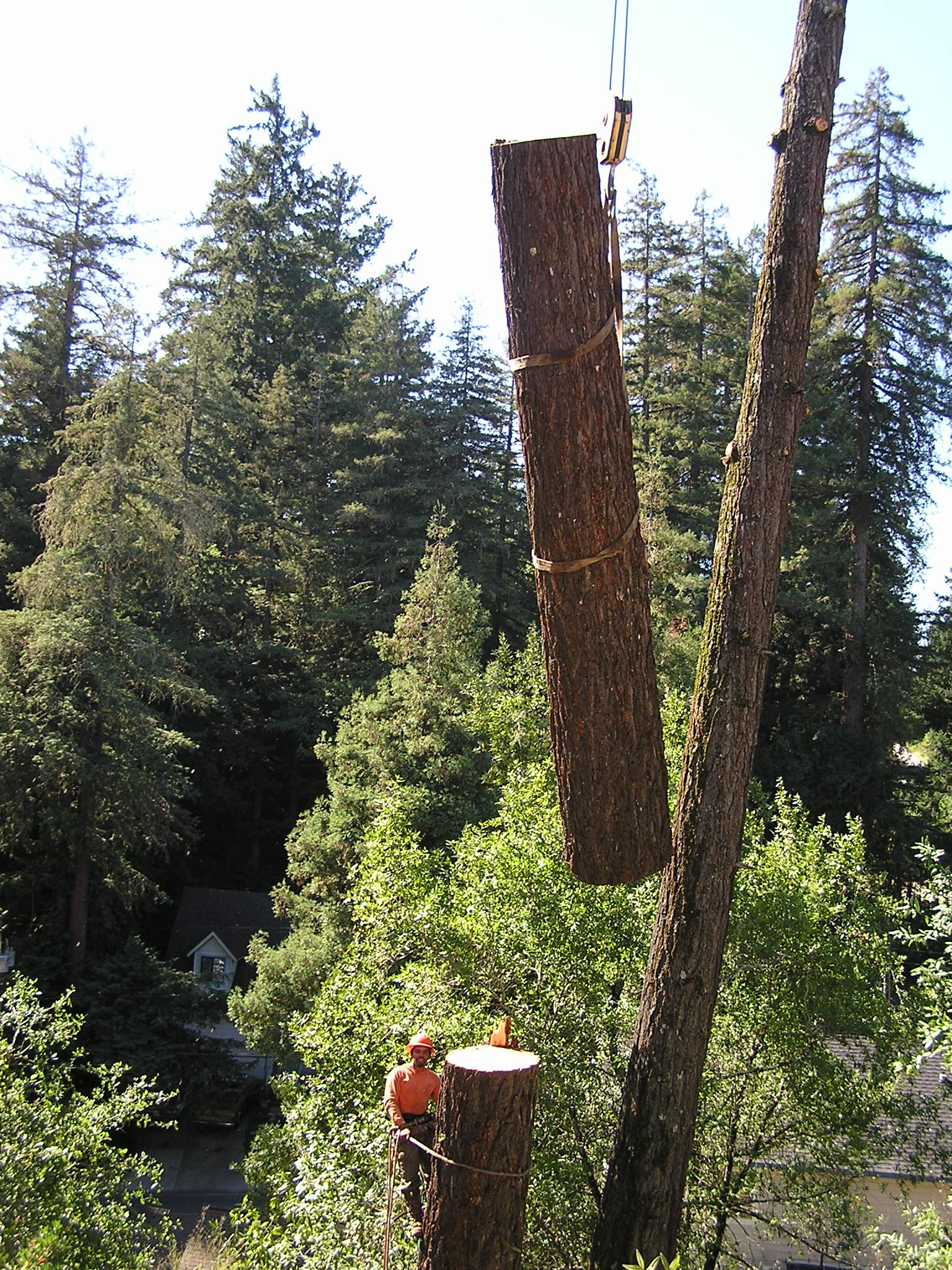 Redwood log lift