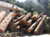 Redwood logpile